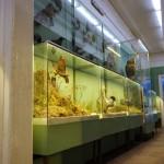 Рязанский кремль - музей заповедник